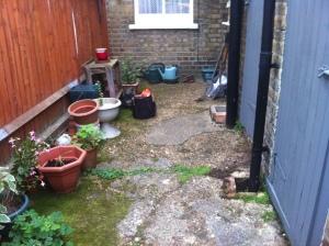 Pegs garden 2013 008