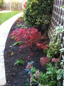 Pegs garden 2013 016