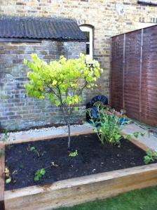 Pegs garden 2013 018