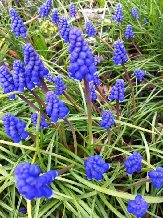 blue 006