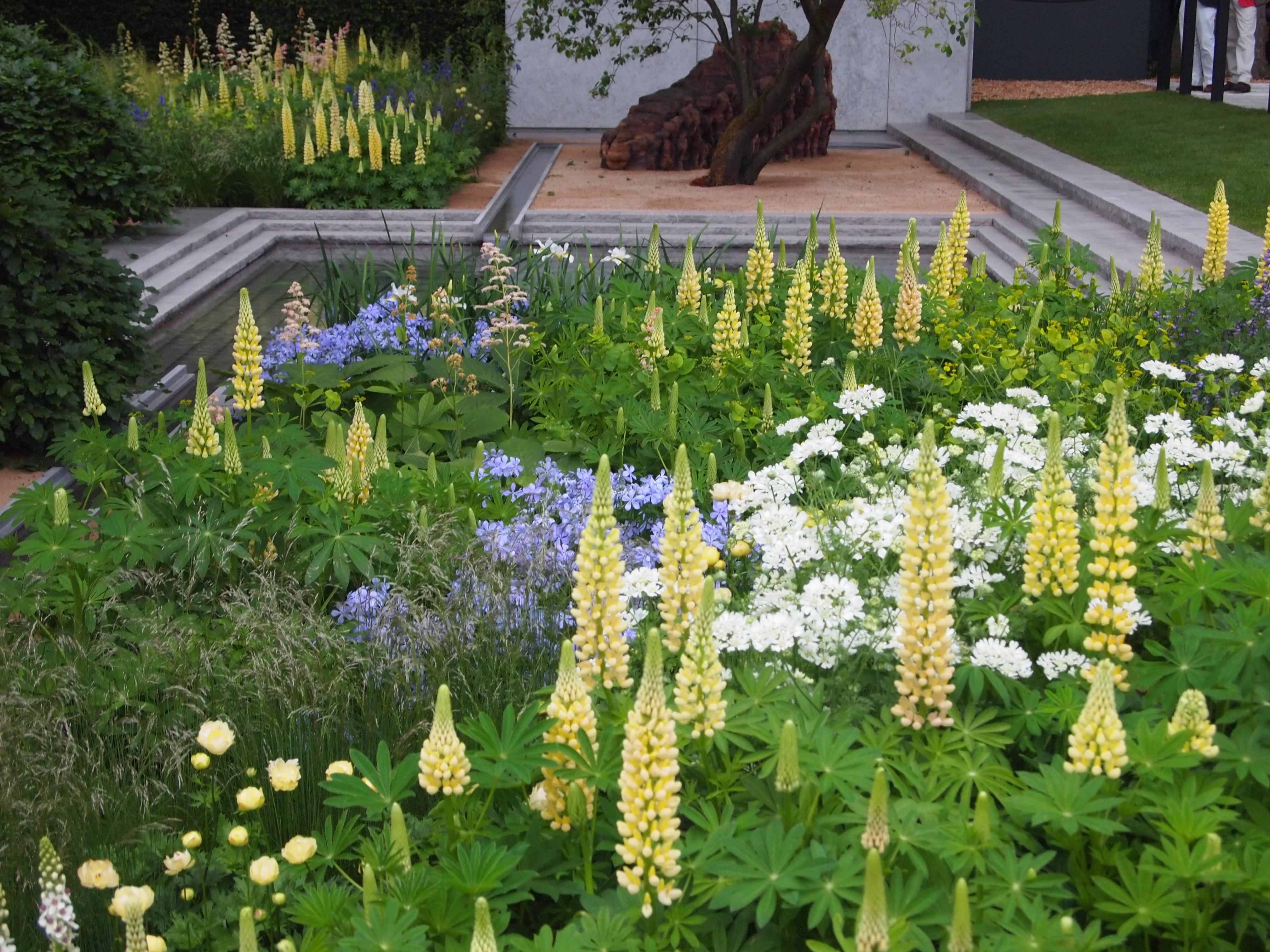Лобелия: посев семян и выращивание рассады 56