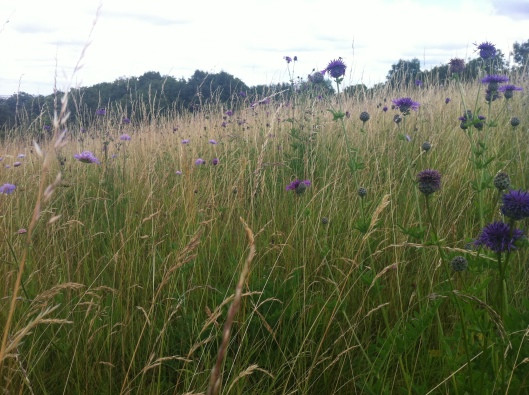 meadow I house 003