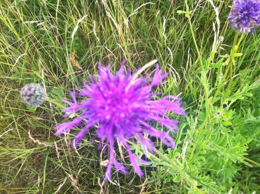 meadow I house 004