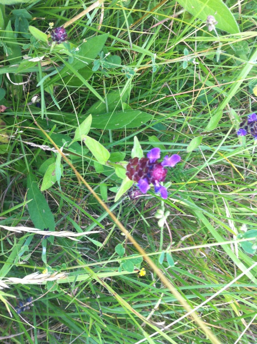 meadow I house 009