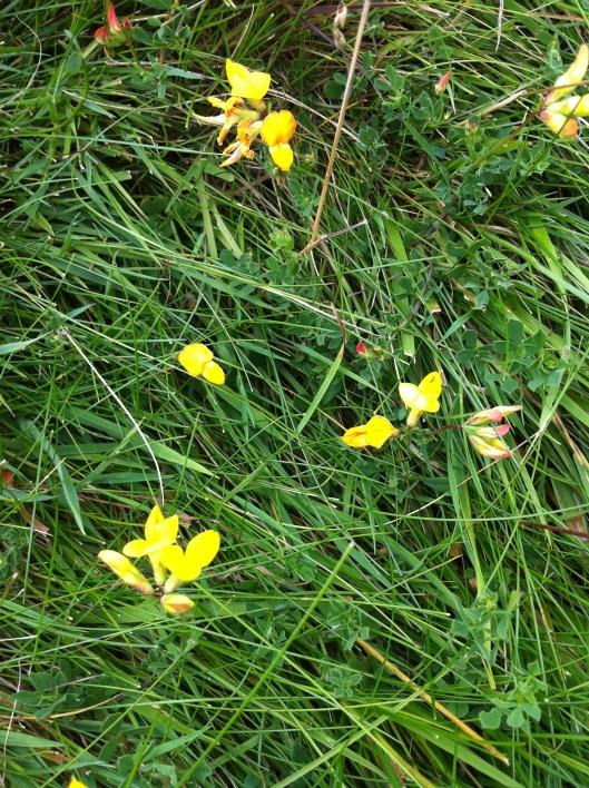 meadow I house 010