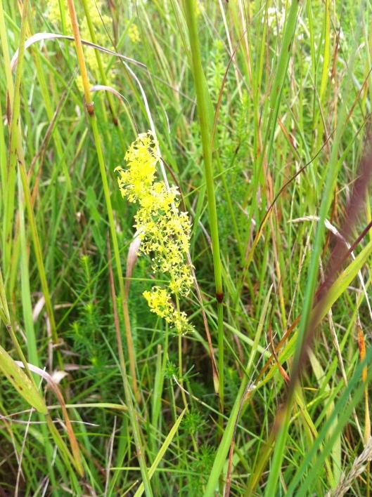 meadow I house 012