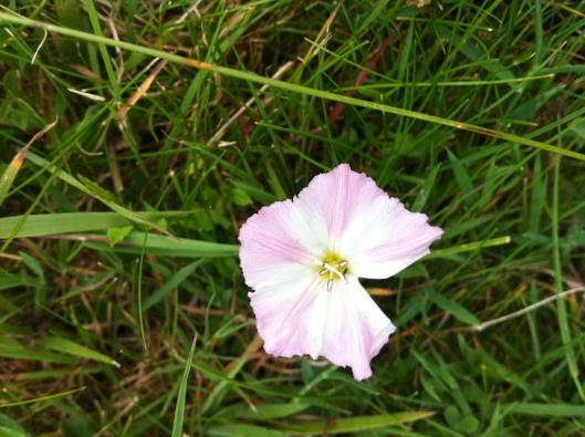 meadow I house 014