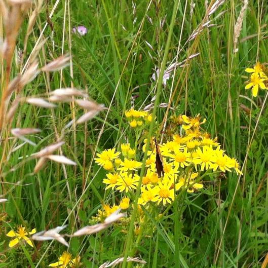 meadow I house 017