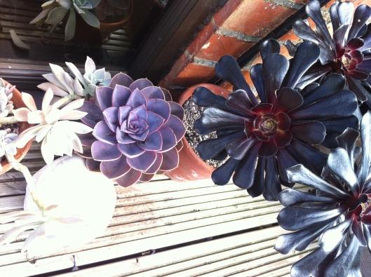 succulents 14 008