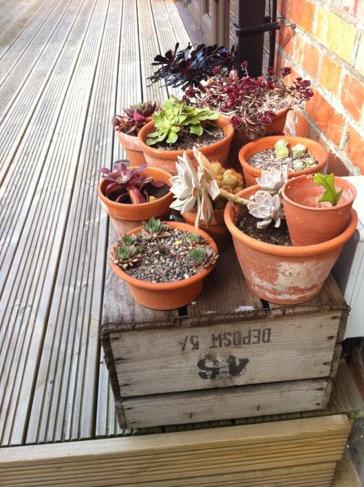 succulents 14 011