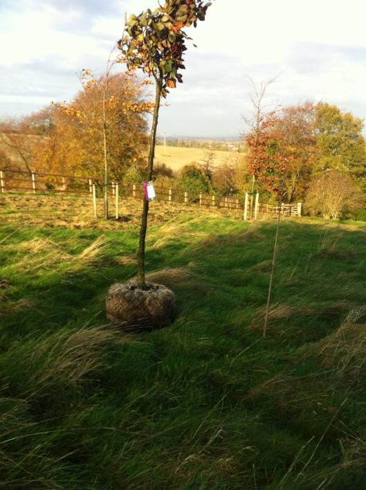 trees nov 14 006