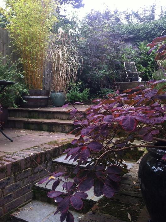 caz garden 14 005