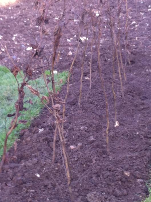 garden plans 15 005