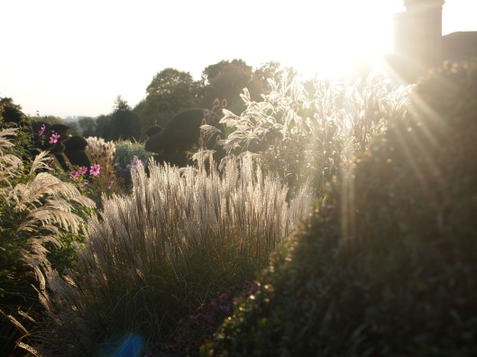 Autumn light at Dixter