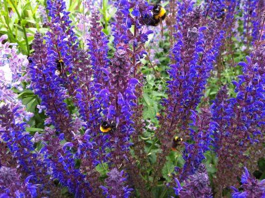 blue bees 001.jpg