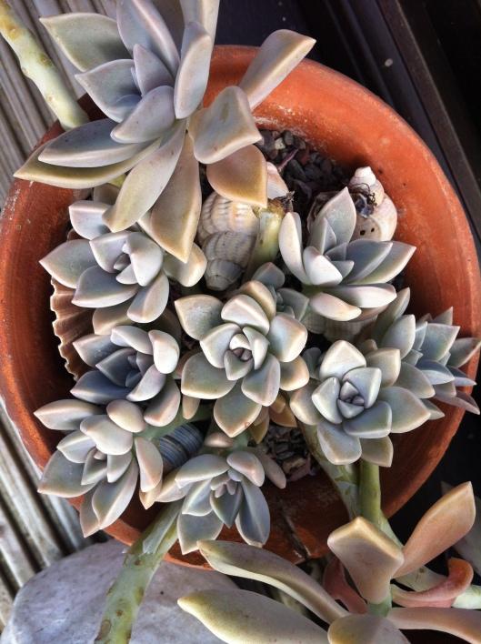 succulents 14 006