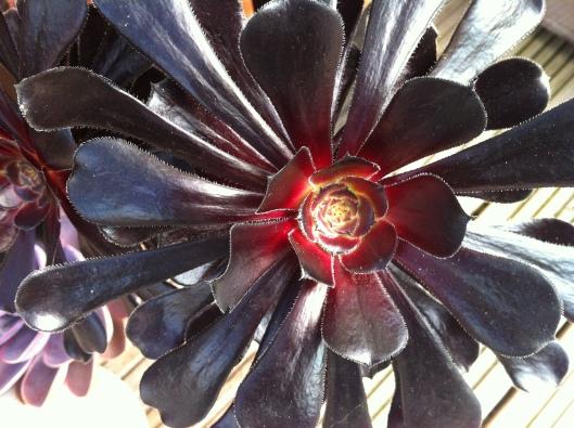 succulents 14 009