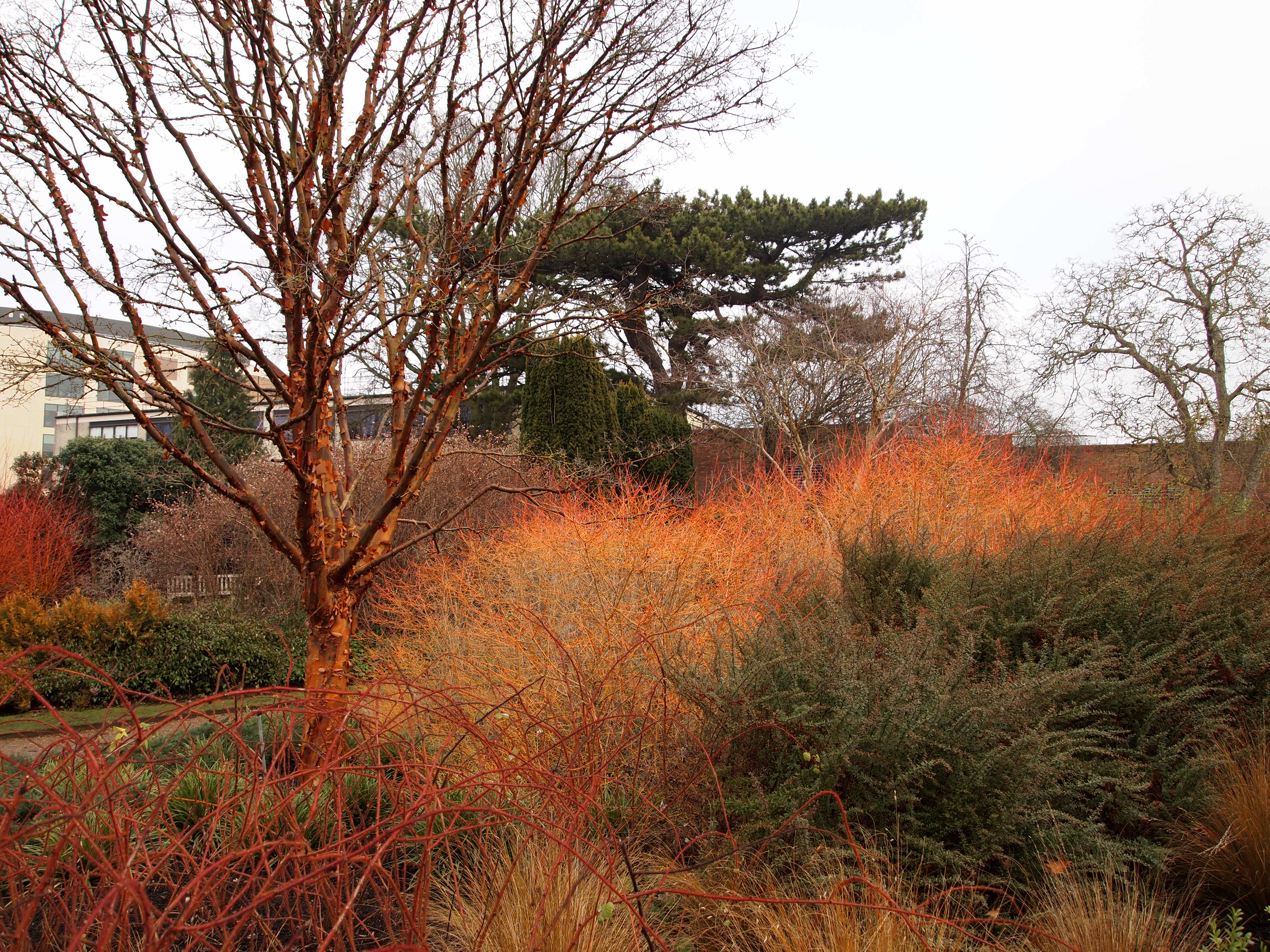 Winter Garden